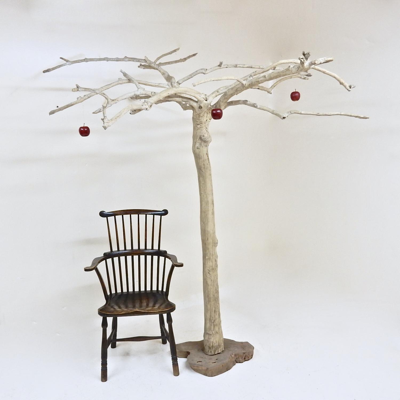 Ancient Coffee Tree